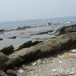 福井の海で生き物観察「弁慶の洗濯岩」