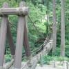 池田町のスリルポット「かずら橋」