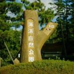 自然を五感で楽しもう坂井市(三国)海浜自然公園