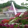日本海側随一のつつじの名所「西山公園」